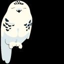 Snowy Owl Pointer