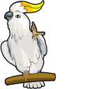 Sulphur-Crested Cockatoo Pointer