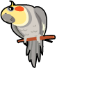 Cockatiel Pointer