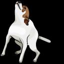 Brazil Dog Dance Meme Pointer