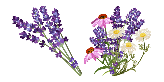 Lavender and Wildflowers